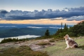 dog sitting and watching the sunset on Cadillac Mountain in Maine