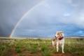 dog standing below a rainbow in Utah
