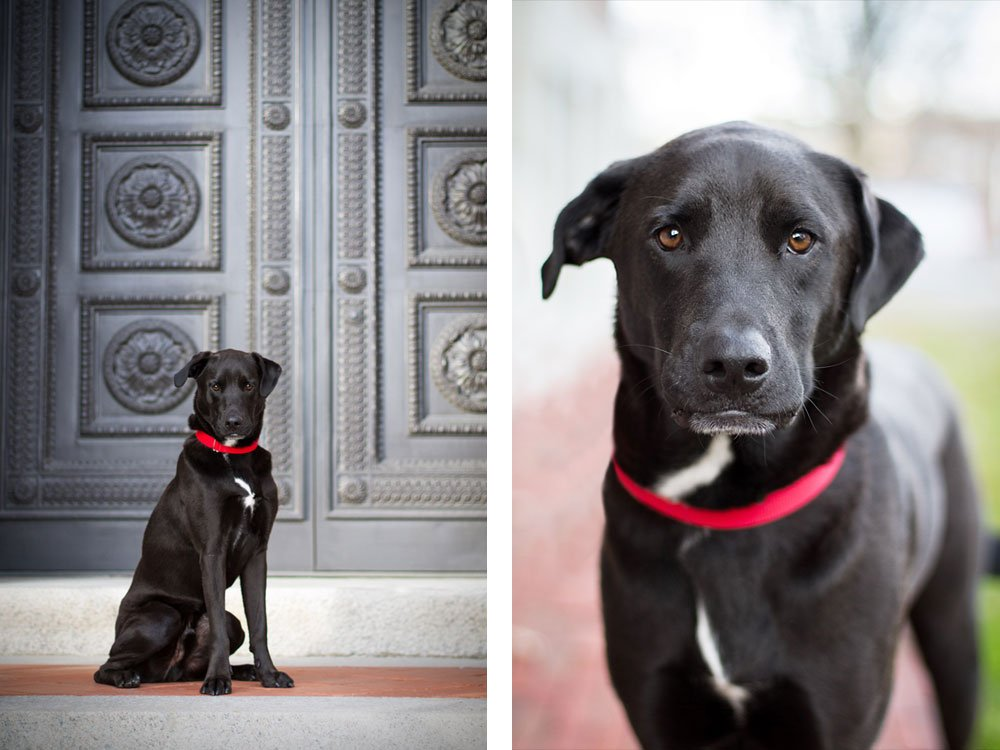 dog sitting in front of an old doorway at Dartmouth College