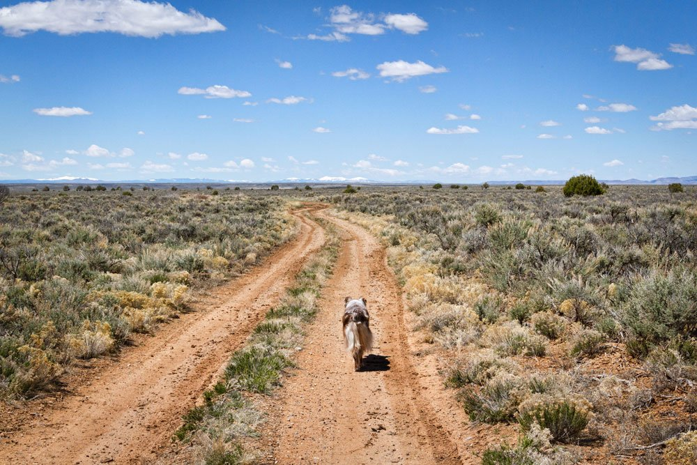 dog walking down a dirt path through the desert in New Mexico