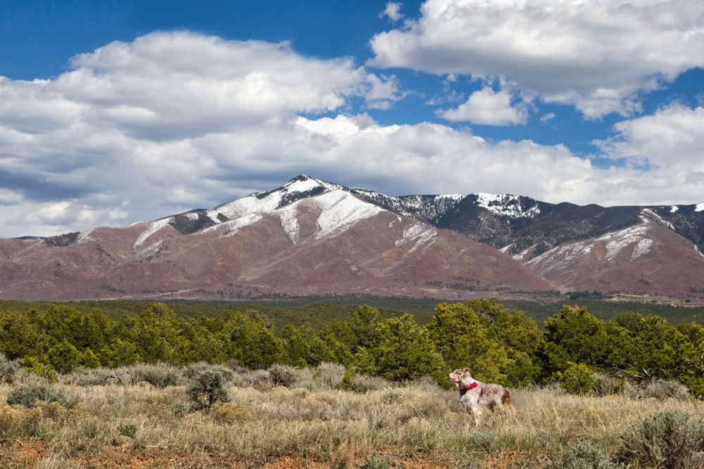 dog standing in front of snow capped montains in New Mexico