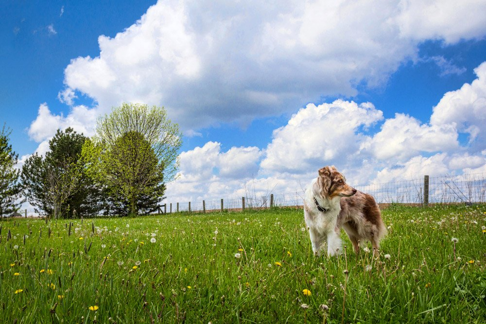 dog standing in a field next to a rest stop in Ohio