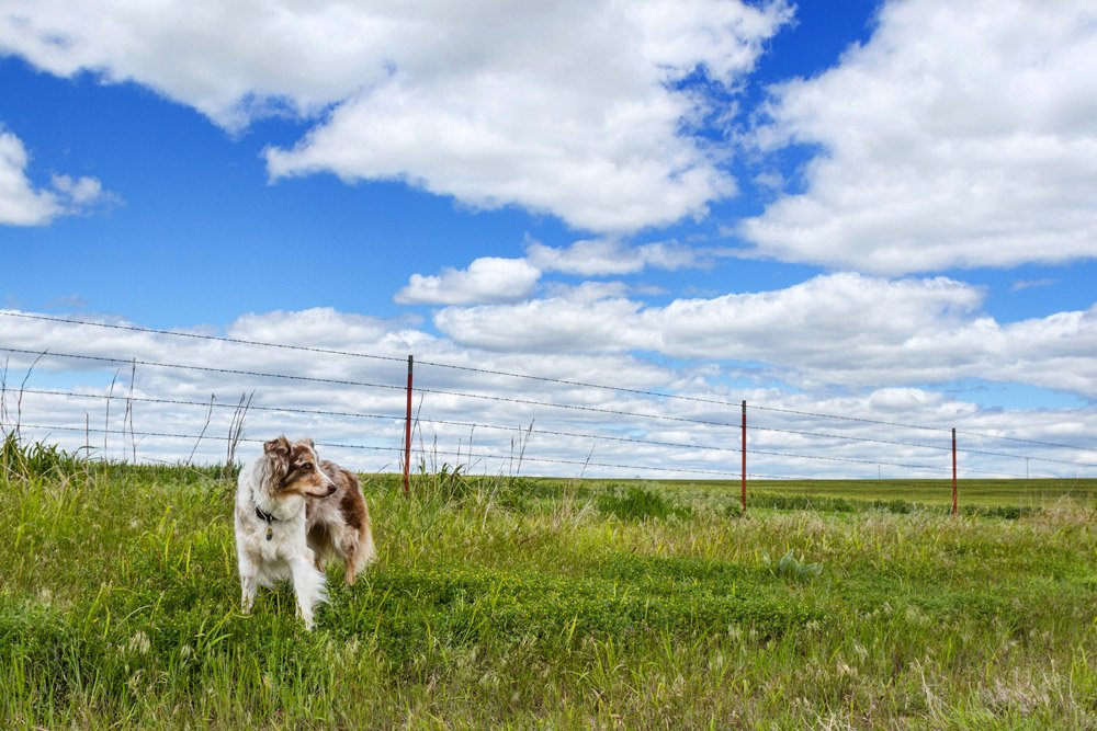 dog standing in front of fence looking off to the side