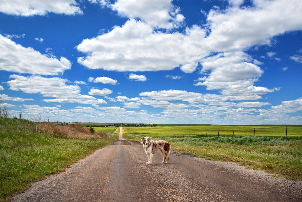 dog standing on a dirt road through green fields in Oklahoma