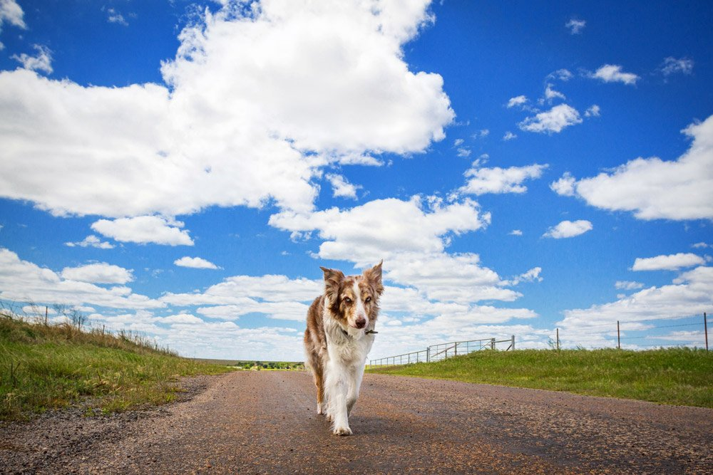 dog walking down dirt road on a sunny day