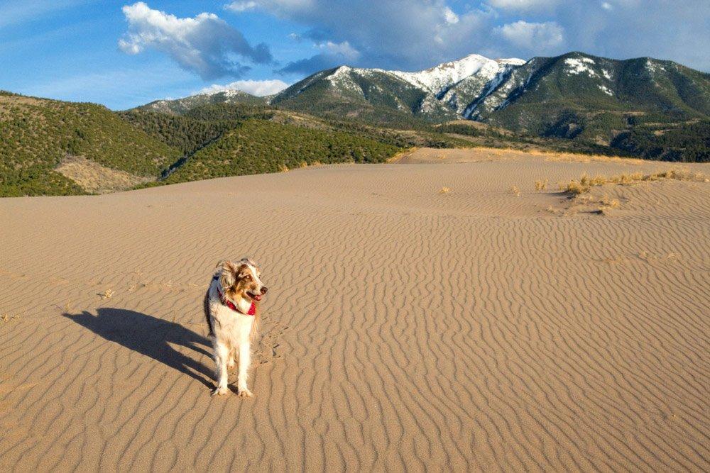 Iris standing on the sand dunes