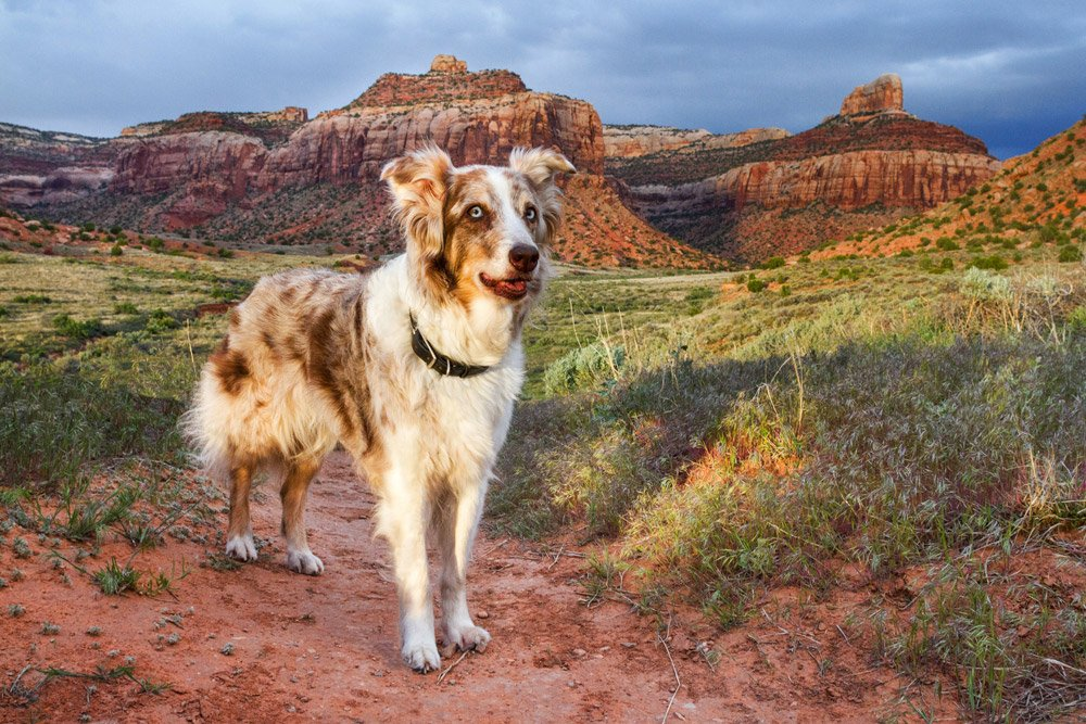 Iris standing in front of Utah's mesas