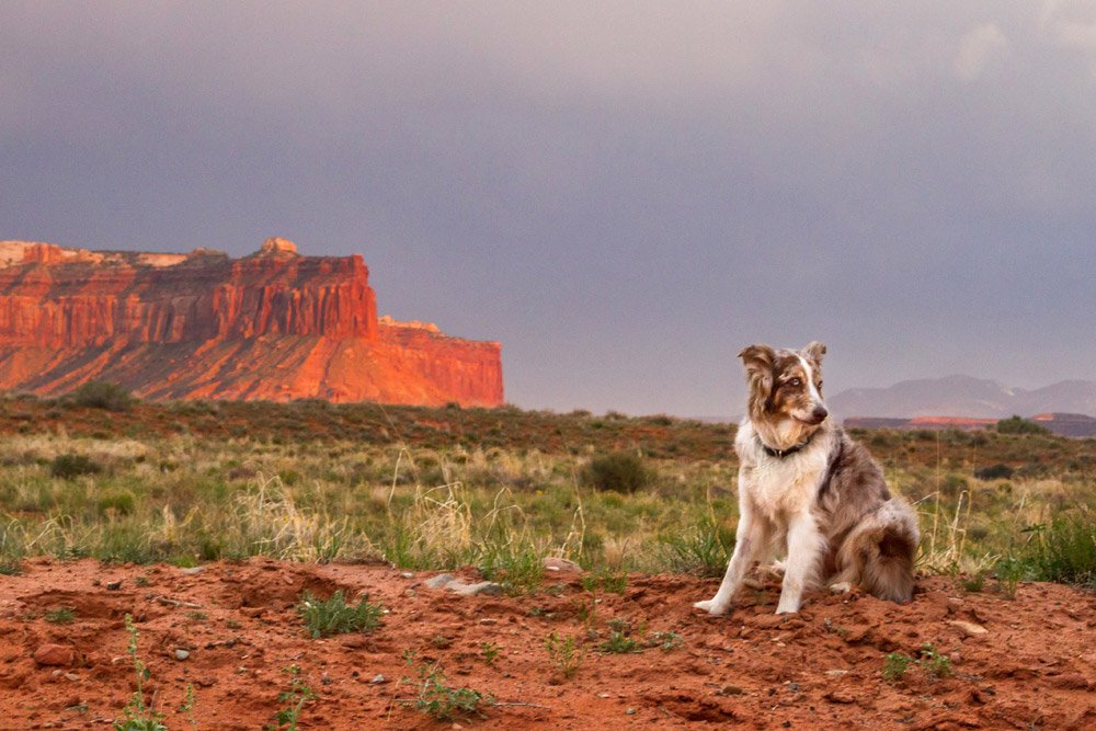 dog sitting in front of mesas in Utah