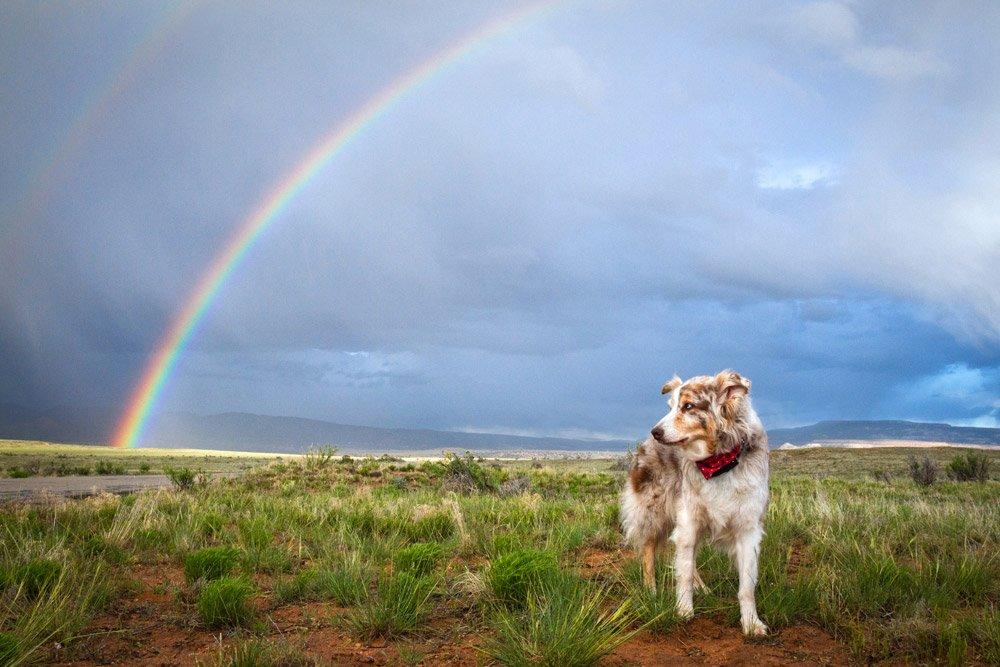 dog standing under a rainbow
