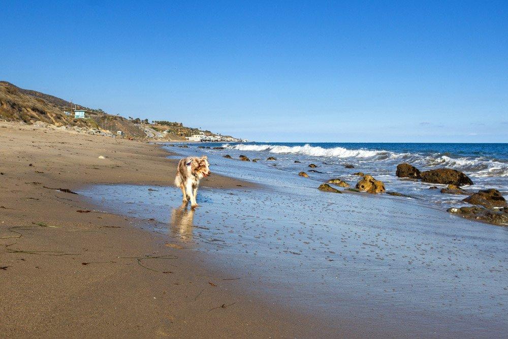 Iris standing on the beach in Malibu