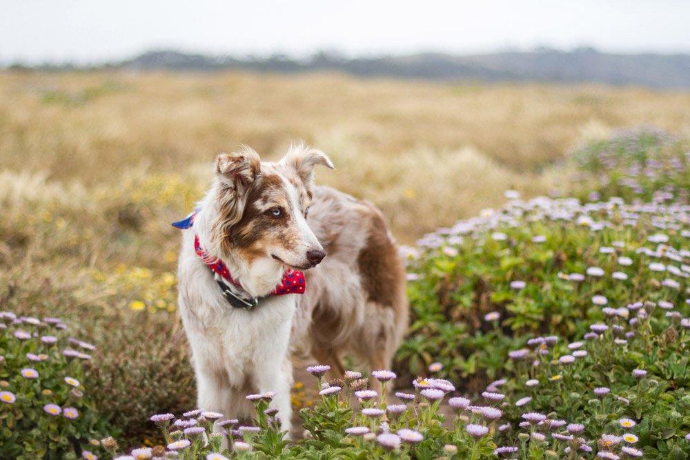 Iris standing in a field of flowers