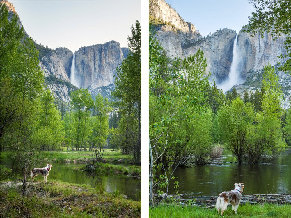 dog looking up at waterfall