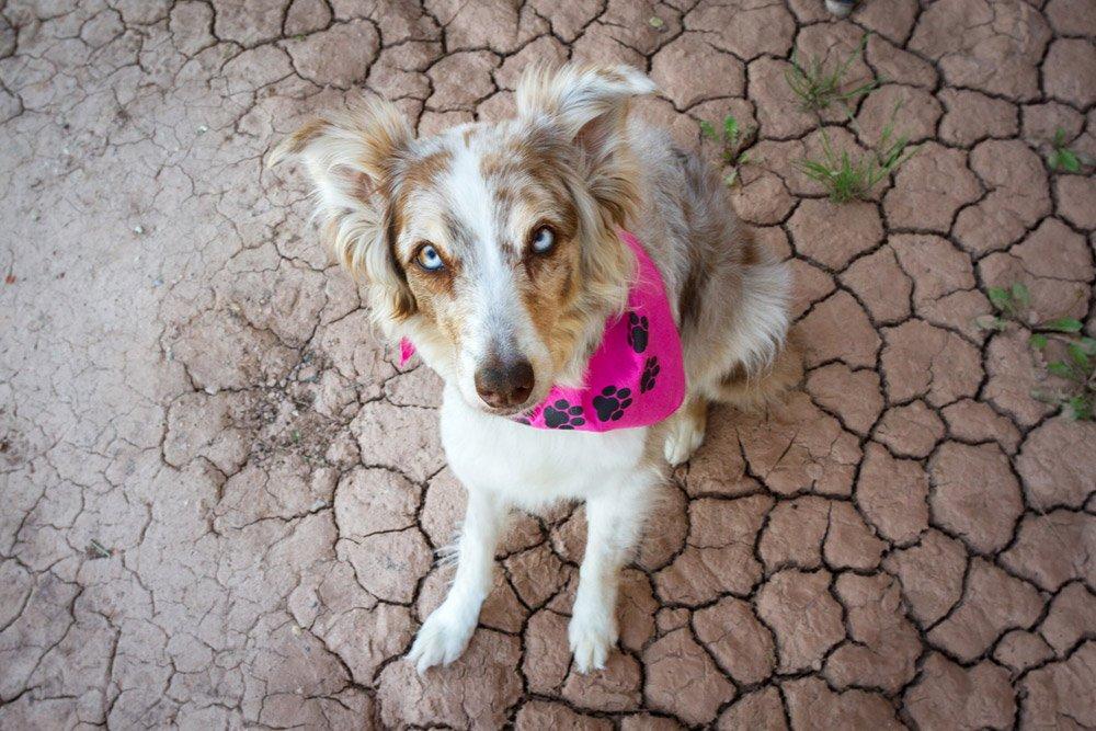 Iris sitting on cracked soil in the desert
