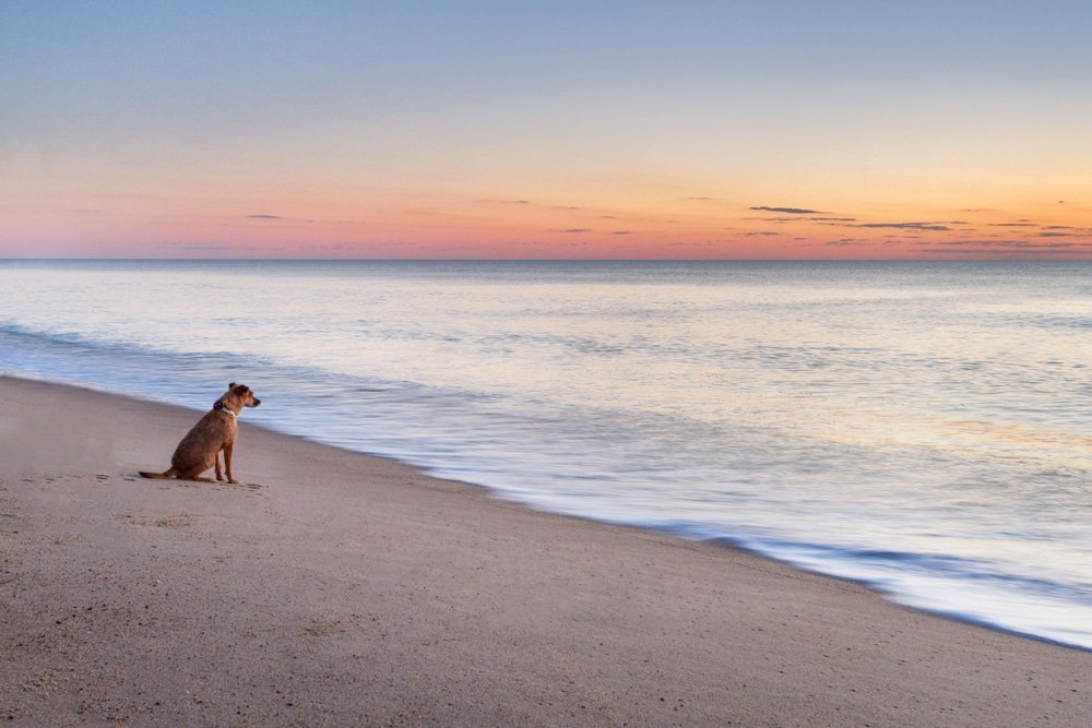 dog sitting on the beach looking out at the ocean at sunrise
