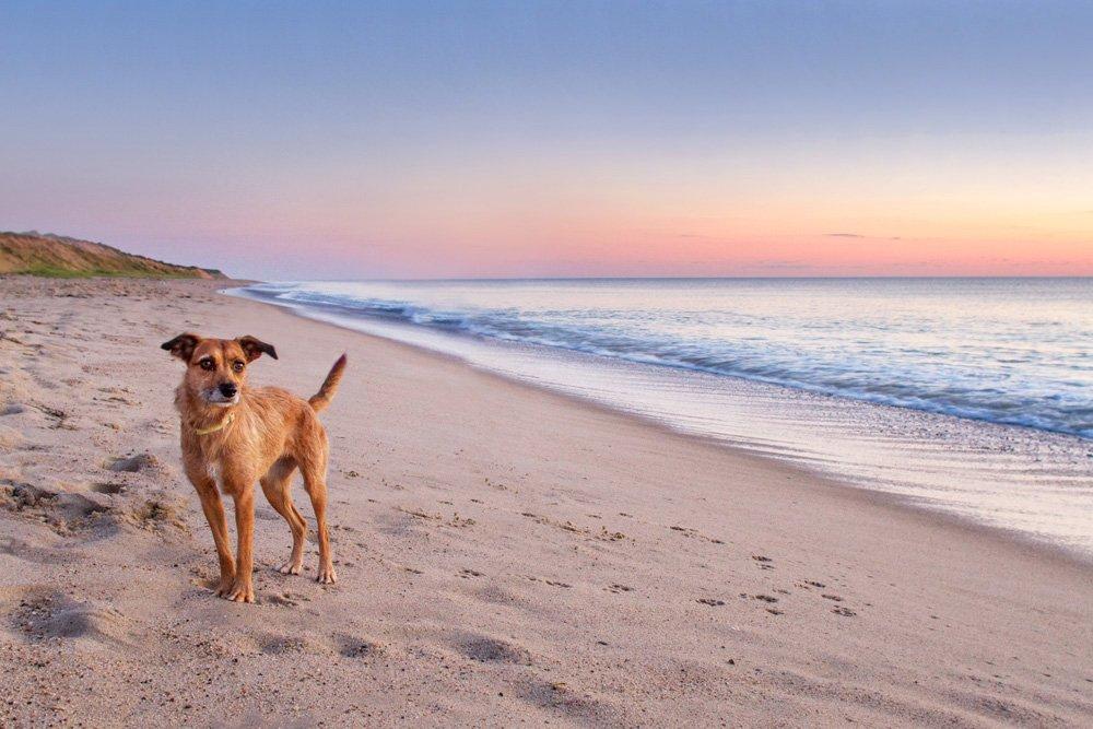Pippi's Sunrise Adventure