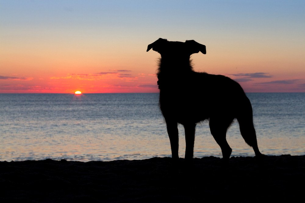 sillhouette of terrier in front of sunrise