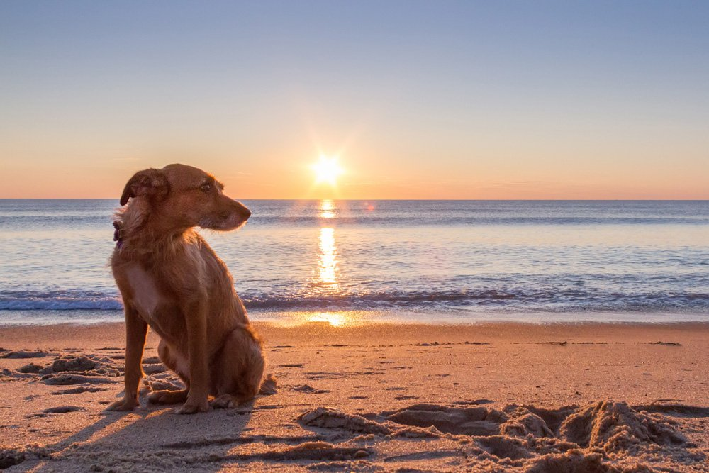 dog sitting on beach as sun come up over the ocean