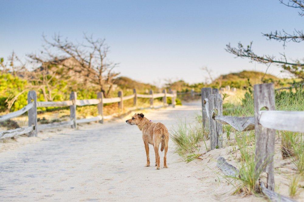 Pippi walking down a path to the beach