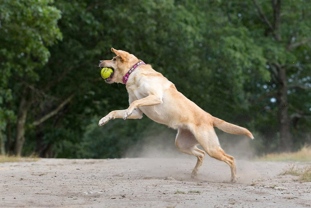 dog leaping through the air to catch a ball