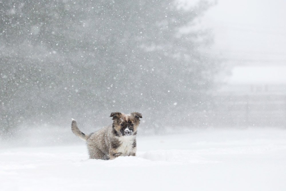 puppy standing in snow storm