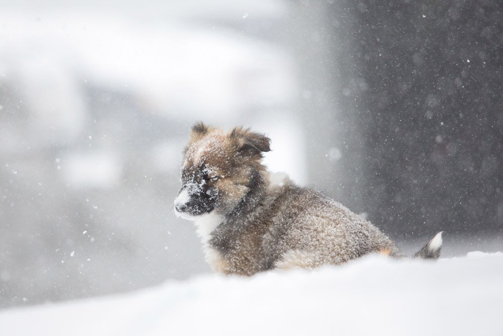 puppy sitting in the snow with his eyes closed