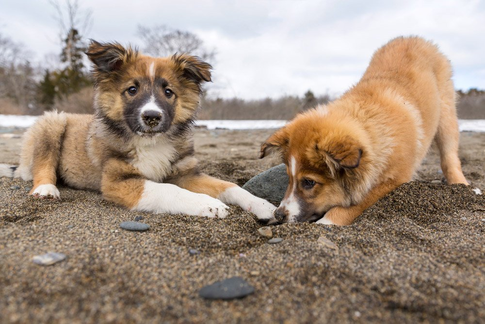 two puppies digging in the sand on the beach