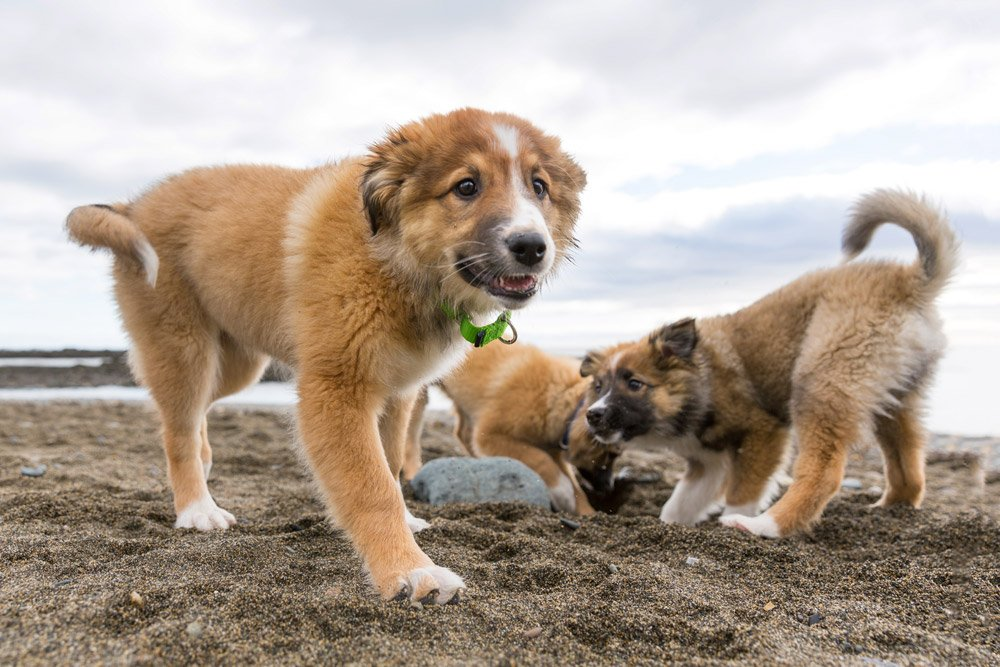 three puppies playing together