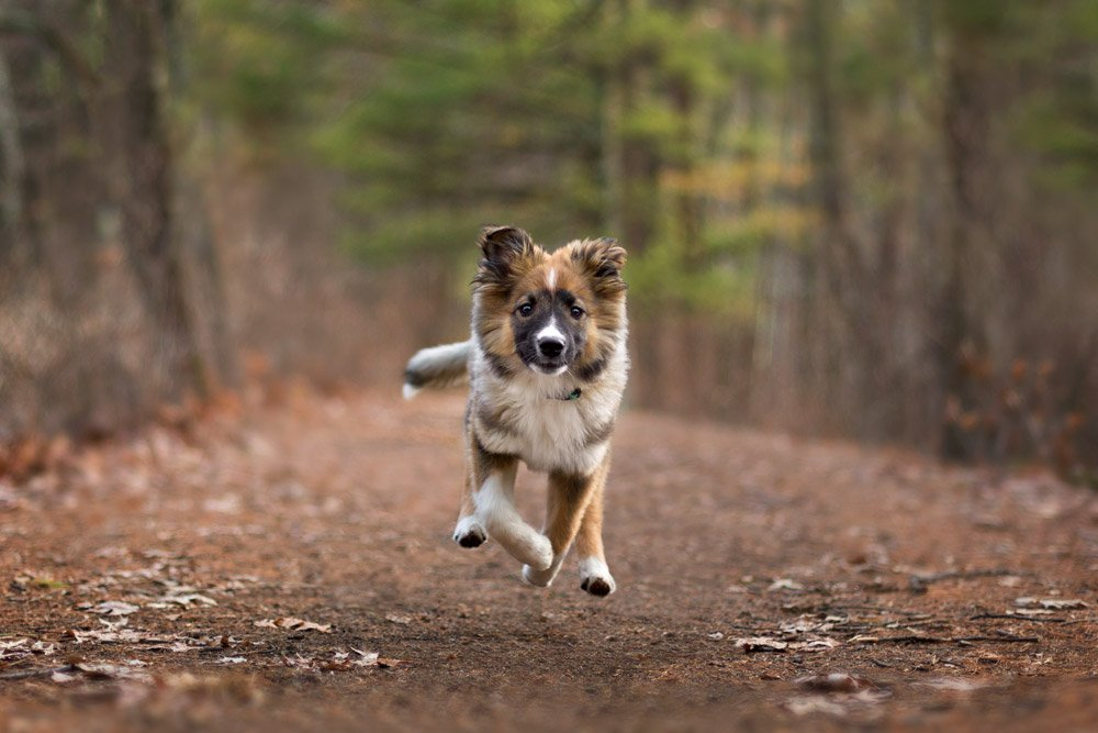 puppy running down a path in the woods