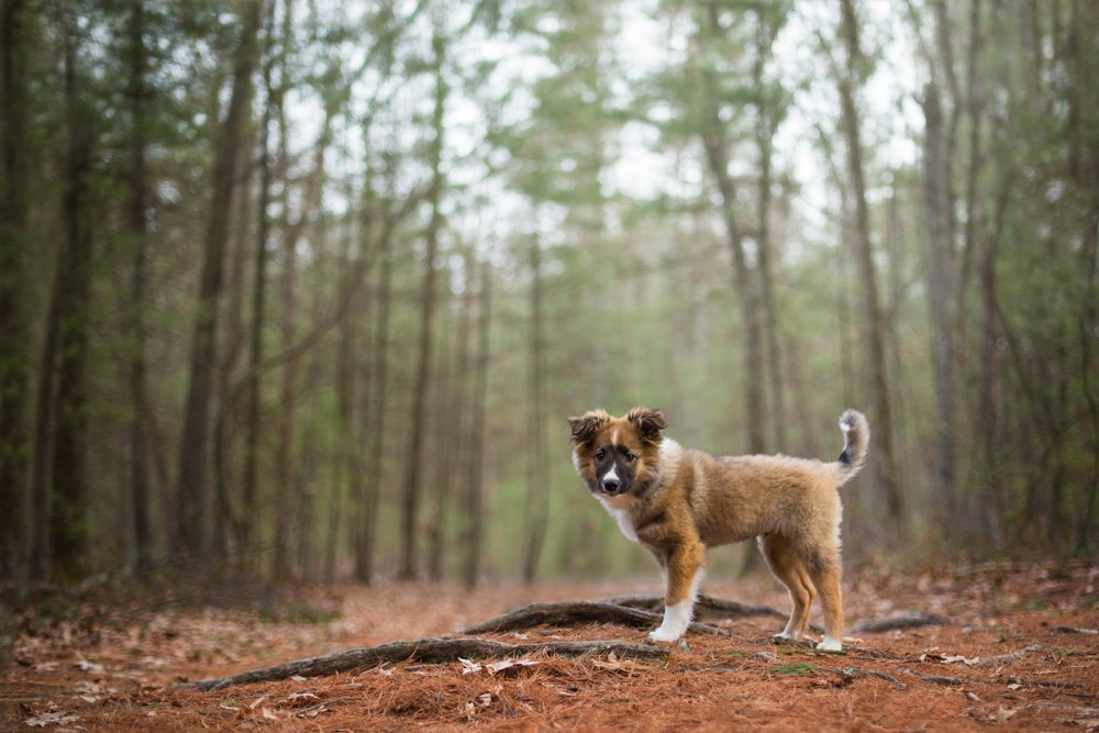 puppy standing in a dark forest