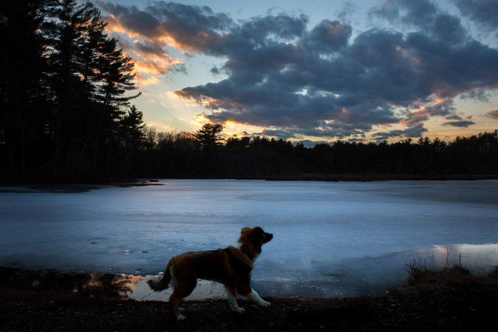 silhouette of puppy standing in front of a lake at sunset