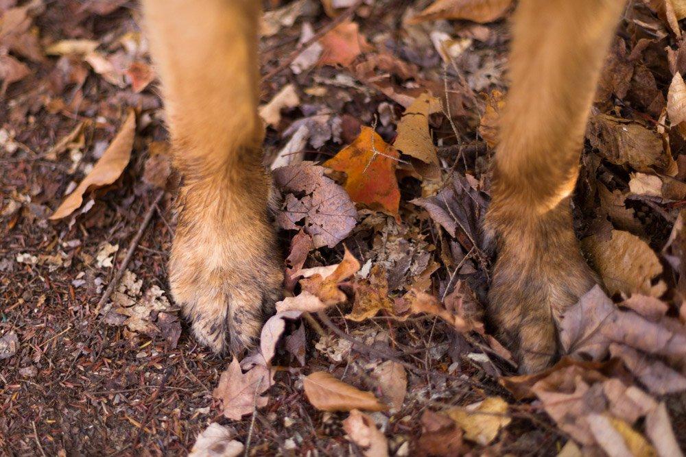 muddy dog paws