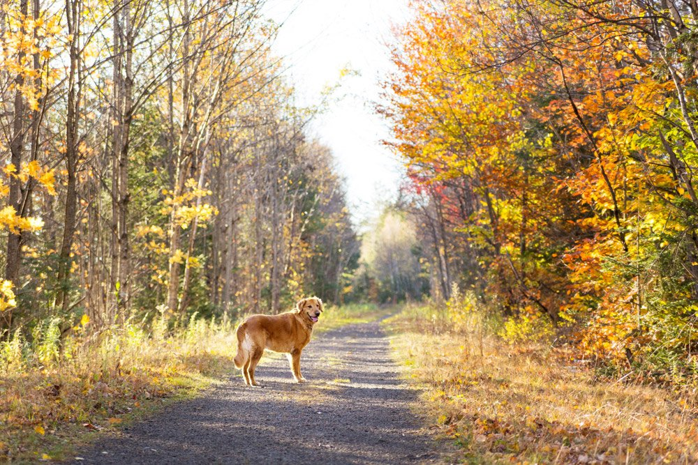dog standing in a path and looking back