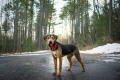 dog standing in the woods