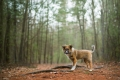 puppy standing in a forest