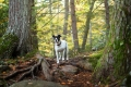 Mixed breed dog walking in the woods
