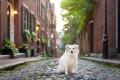 dog sitting on Acorn Street in Boston