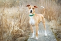 dog standing in a field of golden grass
