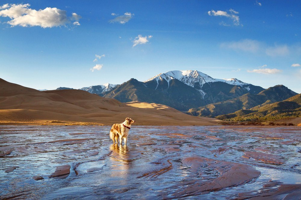 Which National Parks Are The Most Dog Friendly?