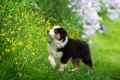 small puppy looking up at colorful flowers