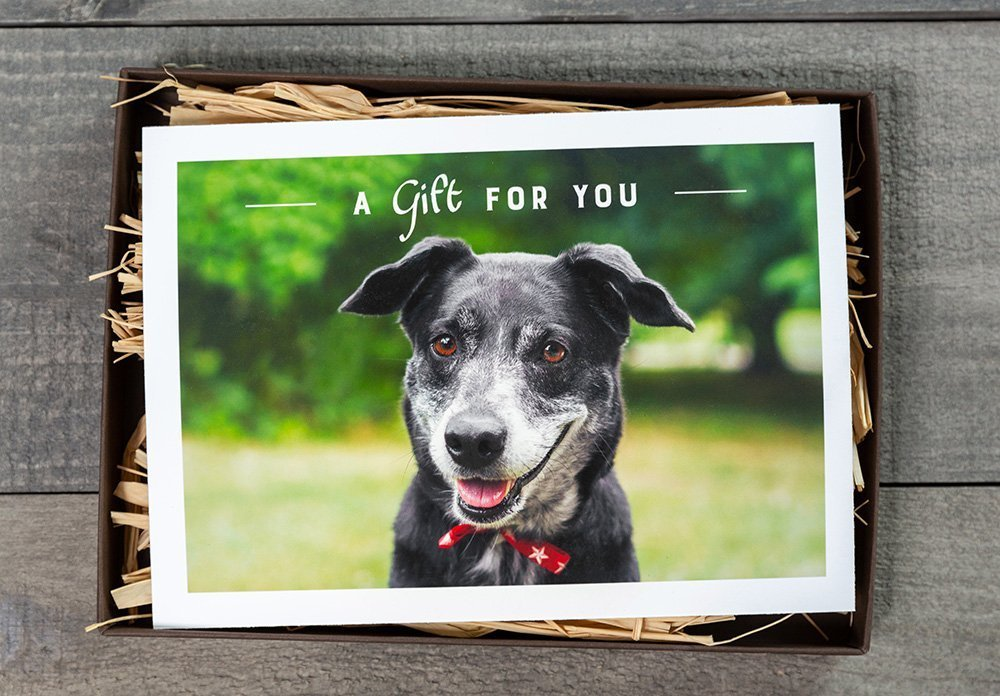 printed gift certificate with a black dog on the front