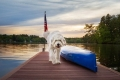 Sheepdog walking down a boat dock at sunset