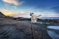 mixed breed dog standing on rocks at sunset