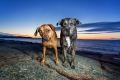 two mixed breed dogs standing on a rock at sunrise
