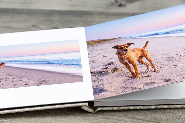 photo album open to a picture of a dog on a beach