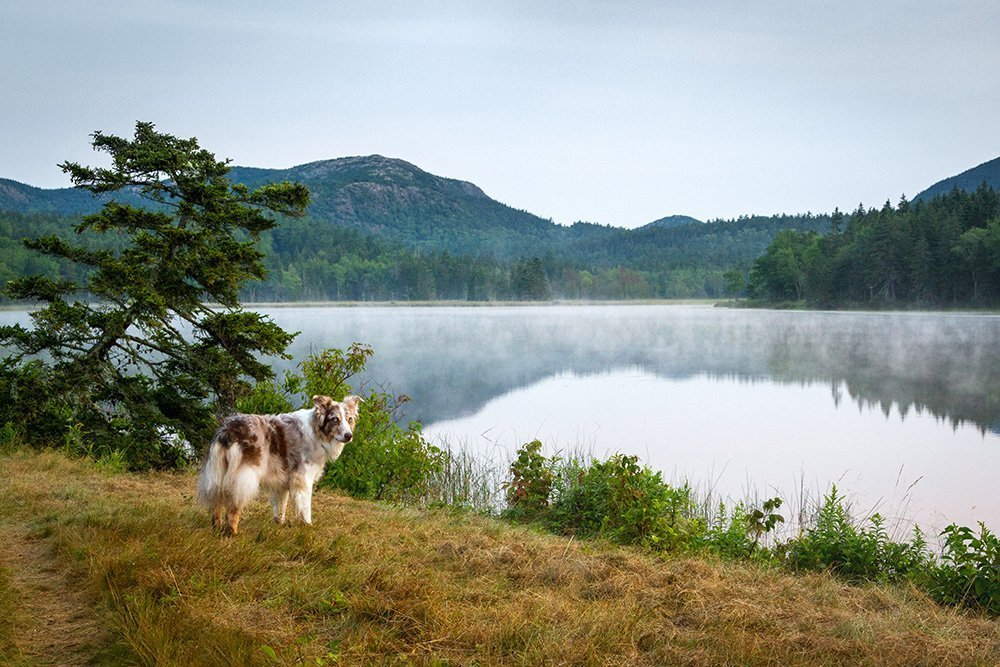 Dog looking out over a foggy lake in the mountains