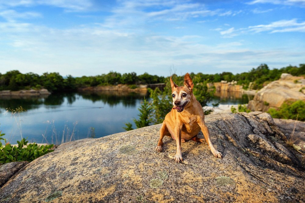 Dog sitting on a rock cliff over looking the water
