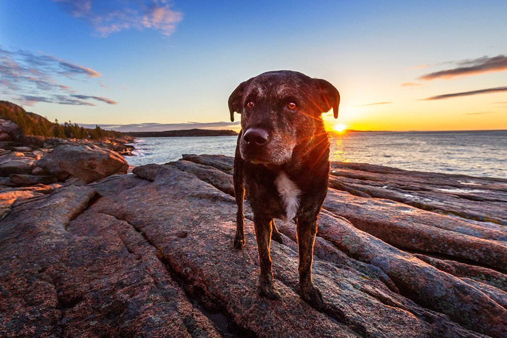 Dog standing on a rock with the sun coming up behind him