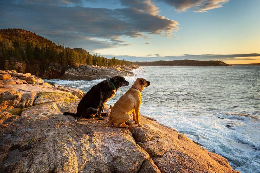 Two dogs sitting together and looking the sunrise over the ocean