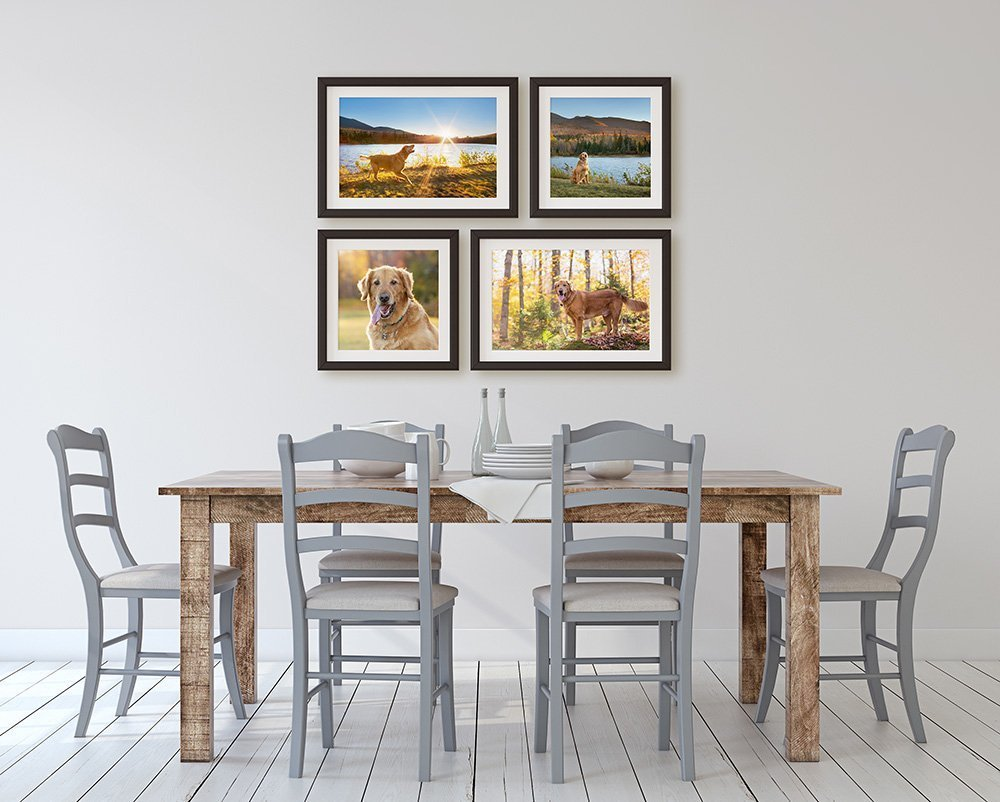 Four framed photograph prints of a Golden Retriever hanging on a wall over a kitchen table