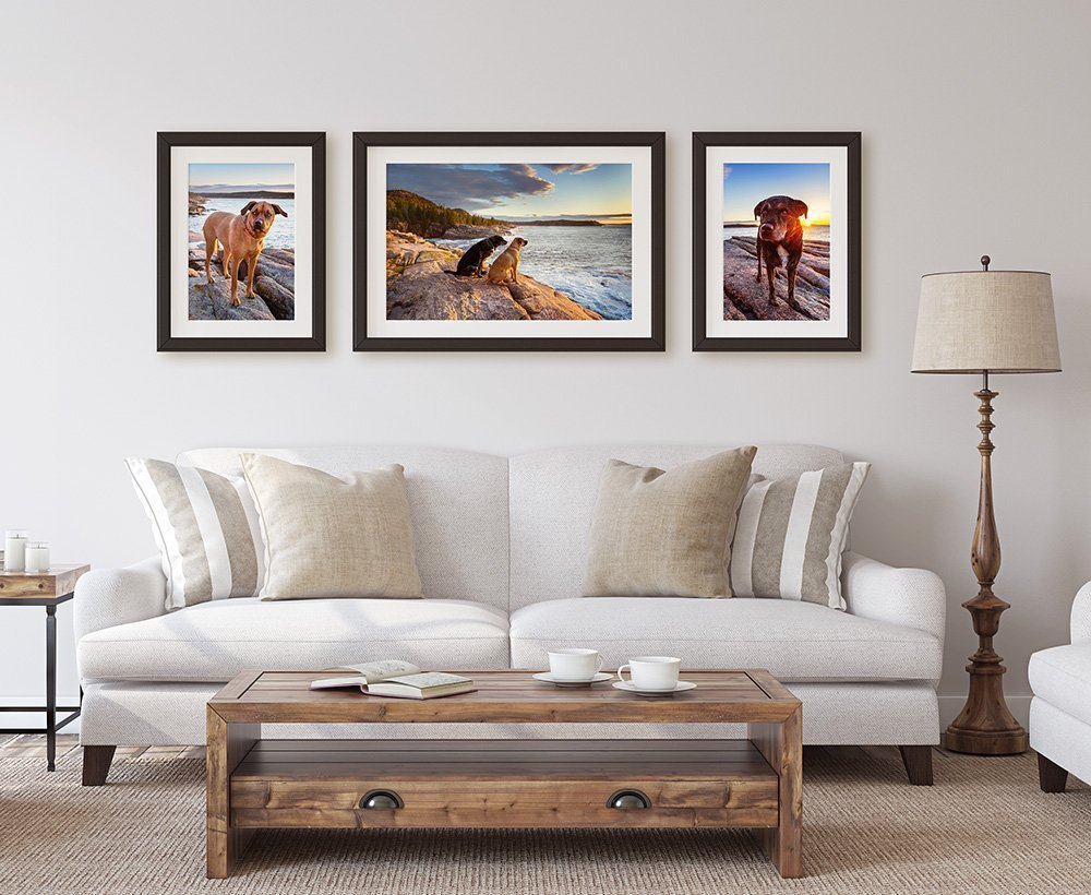 Three framed photographs of dogs at sunrise hanging on a wall over a couch